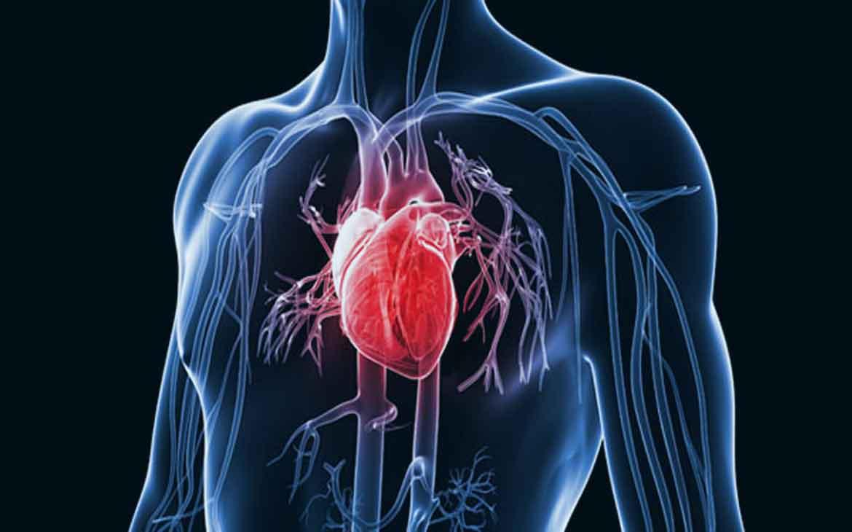 new-Heart-Disease-news-site